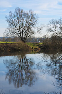 Germany, Hesse, Limburg, tree and water reflections at Lahn river - MHF000267