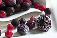 Frozen blackberry, wild berries, red and black currants and blueberries, close-up - YFF000010