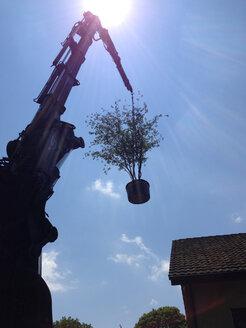 Crane with plant, Switzerland, Thurgau, Oberhofen - JED000130