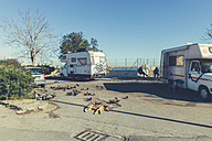 Italy, Sicily, Palermo, Dog sleeping by trailers at see - MF000824