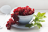 Bowl of currants on wooden table - CSF020669