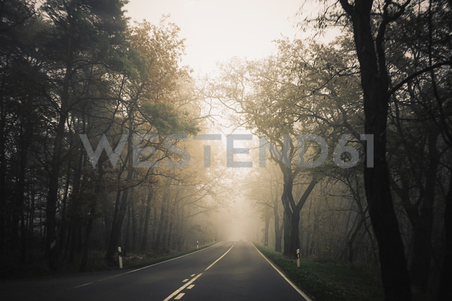 Germany, Saxony, country road at fog - MJF000860