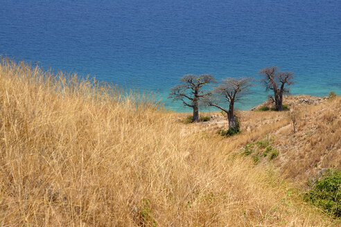 Malawi, Likoma Island, three baobab trees (Adansonia) at Lake Malawi - JBAF000005