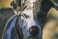 Face of a dog, close-up - AMCF000044