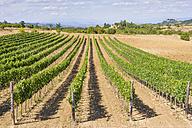Italy, Tuscany, Val d'Orcia, Pienza, Vineyard - MJF000823