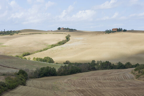 Italy, Tuscany, Val d'Orcia, Rolling landscape with flock of sheep - MJF000861