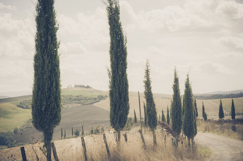 Italy, Tuscany, Val d'Orcia, Rolling landscape with cypresses - MJF000748