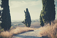 Italy, Tuscany, Val d'Orcia, Dirt track with cypresses - MJF000826