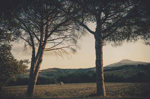 Italy, Tuscany, Val d'Orcia, Rolling landscape with trees - MJF000838