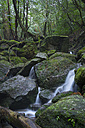 Japan, Yakushima, Waterfall in the rainforest, World Heritage, natural site - FL000385
