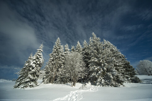 Germany, Baden-Wuerttemberg, Black Forest, Feldberg, Trees in winter - PAF000313