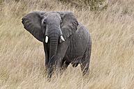 Kenya, Rift Valley, Maasai Mara National Reserve - CB000176