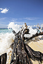 Indonesia, Lombok, Gili Meno, Dead tree trunk at beach - KRPF000198