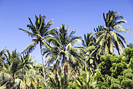 Indonesia, Bali, Palms at beach - KRPF000201