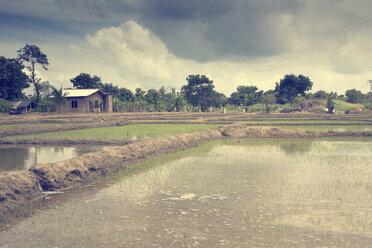 Sri Lanka, North Central Province, Anuradhapura, fluted rice fields - DRF000492