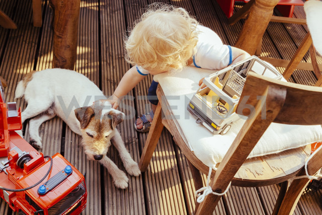 Little boy playing with Jack Russel terrier  and vehicle toys, elevated view - MF000879 - Mareen Fischinger/Westend61