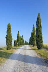 Italy, Tuscany, Siena Province, Crete Senesi, view to dirt road lined by cypress trees - RUEF001170