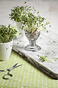 Cress (Lepidum sativum) in eggcup and cup, scissors - SBDF000575