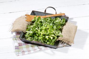Lamb's lettuce (Valerianella) in a tray - MAEF007799