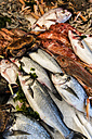 Italy, Gaeta, Fresh fish at fishmarket, close up - KAF000101
