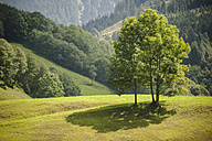 Austria, Grossglockner, Meadow and trees - PAF000396