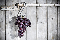Red grapes hanging on hook in front of grey wooden wall - MAEF007860