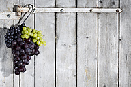 Different red and white grapes hanging on hook in front of grey wooden wall - MAEF007862