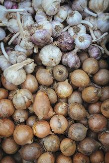 Germany, Baden-Wuerttemberg, Freiburg, vegetable market, Garlic (Allium sativum) and onions (Allium cepa) - ELF000846