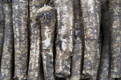 Germany, Baden-Wuerttemberg, Freiburg, vegetable market, Horseradishes (Armoracia rusticana) - ELF000852