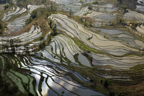 China, Yunnan, Yuanyang, Rice terraces - JBAF000086