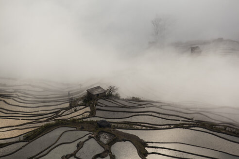 China, Yunnan, Yuanyang, Overcast rice terraces - JBA000093