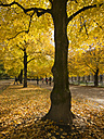 Germany, Bavaria, Munich, near Odeonsplatz, at Hofgarten, in autumn - LAF000567