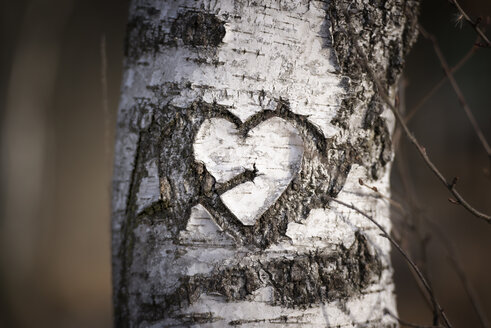 Austria, heart carved into a birch (Betula), close-up - MW000008