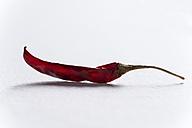 Dried red chili pod, studio shot - MYF000165