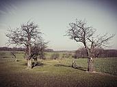 Saxony, Germany, Smartphone, orchard - MJF000869