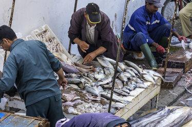 Morocco, Essaouira, Kasbah, fishermen with fresh fish - THA000104