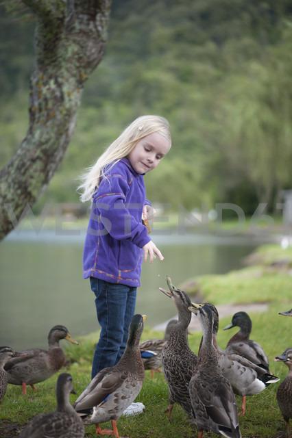 New Zealand, North Island, Bay of Plenty, Rotorua, Lake Tikitapu, girl feeding ducks - JB000016