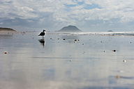 New Zealand, North Island, Bay of Plenty, Tauranga, Papamoa Beach with Mount Maunganui in the background and gull (Larus dominicanus) - JB000048