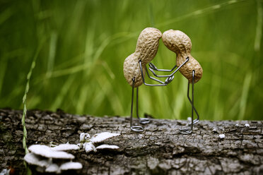 Pair of peanuts in love - NIF000004