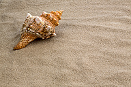 Shell lying on beach, close-up - EJWF000324