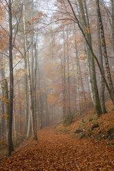 Germany, Bavaria, Upper Bavaria, Berchtesgadener Land, Berchtesgaden National Park, Schoenau at Koenigssee, fog at autumnal wood - WIF000387