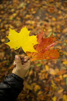 Boy holding autumn leaves in his hand - TKF000298