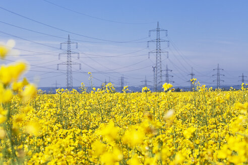 Germany, North Rhine-Westphalia, Pulheim, view to rape fields (Brassica napus) in front of overland high voltage power lines - GW002606