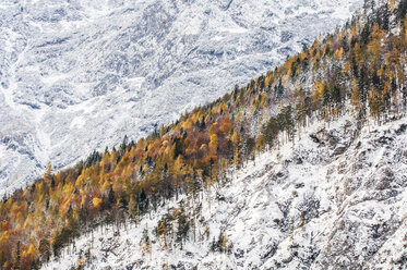 Austria, Styria, forest in autumn at Koppenpass - HHF004735