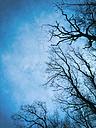 Migratory birds and silhouettes of bare trees, Rhein-Sieg district, North Rhine Westphalia, Germany - ONF000411