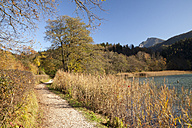 Germany, Bavaria, Upper Bavaria, Bad Reichenhall, view to trail and Lake Thumsee in autumn - WIF000440