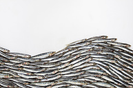 Wave formed of anchovies (Engraulidae) on white ground - MUF001445