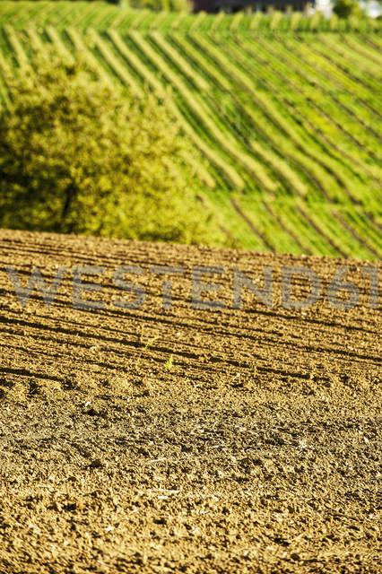 Austria, Styria, Western Styria, Deutschlandsberg, field in spring, grapevines in the background - HHF004744 - Hans Huber/Westend61