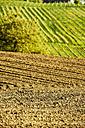 Austria, Styria, Western Styria, Deutschlandsberg, field in spring, grapevines in the background - HHF004744