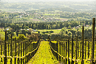 Austria, Styria, Western Styria, Deutschlandsberg, view to grapevines and valley - HHF004741
